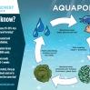 Wave Crest Aquaponics Graphic