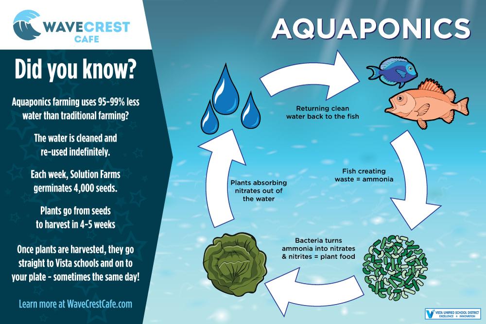 Infographic - Aquaponics