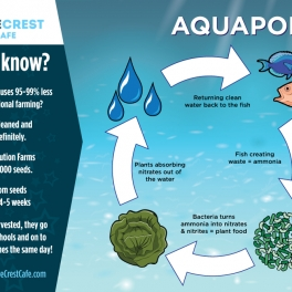 Wave Crest Cafe Infographic Aquaponics