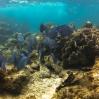 Sealife - Belize